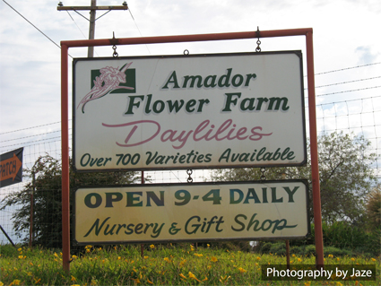 Amador County Flower Farm Entrance Road