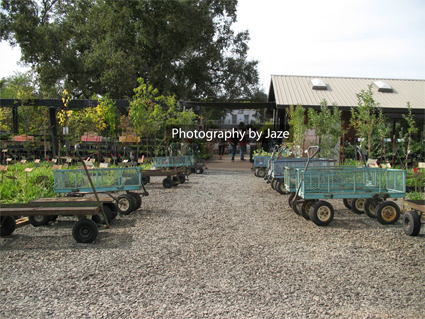 Amador County Flower Farm Garden Wagonwheel Cart